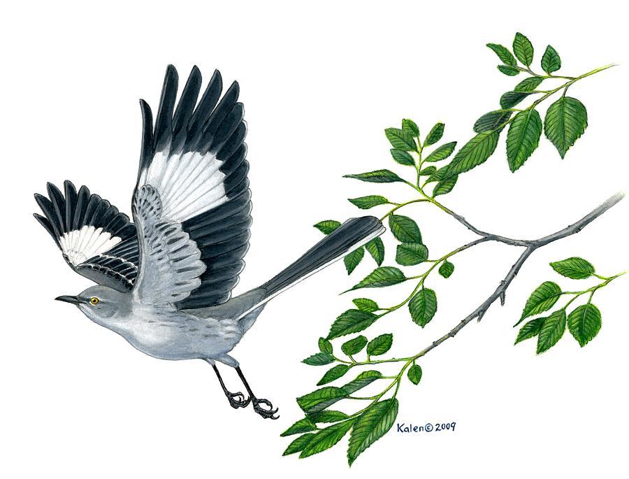 900x685 Northern Mockingbird Painting By Kalen Malueg