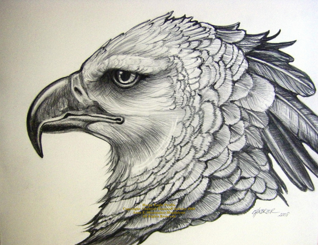 1024x789 Pencil Sketches Modern Art Art Pencil Drawing Eagle