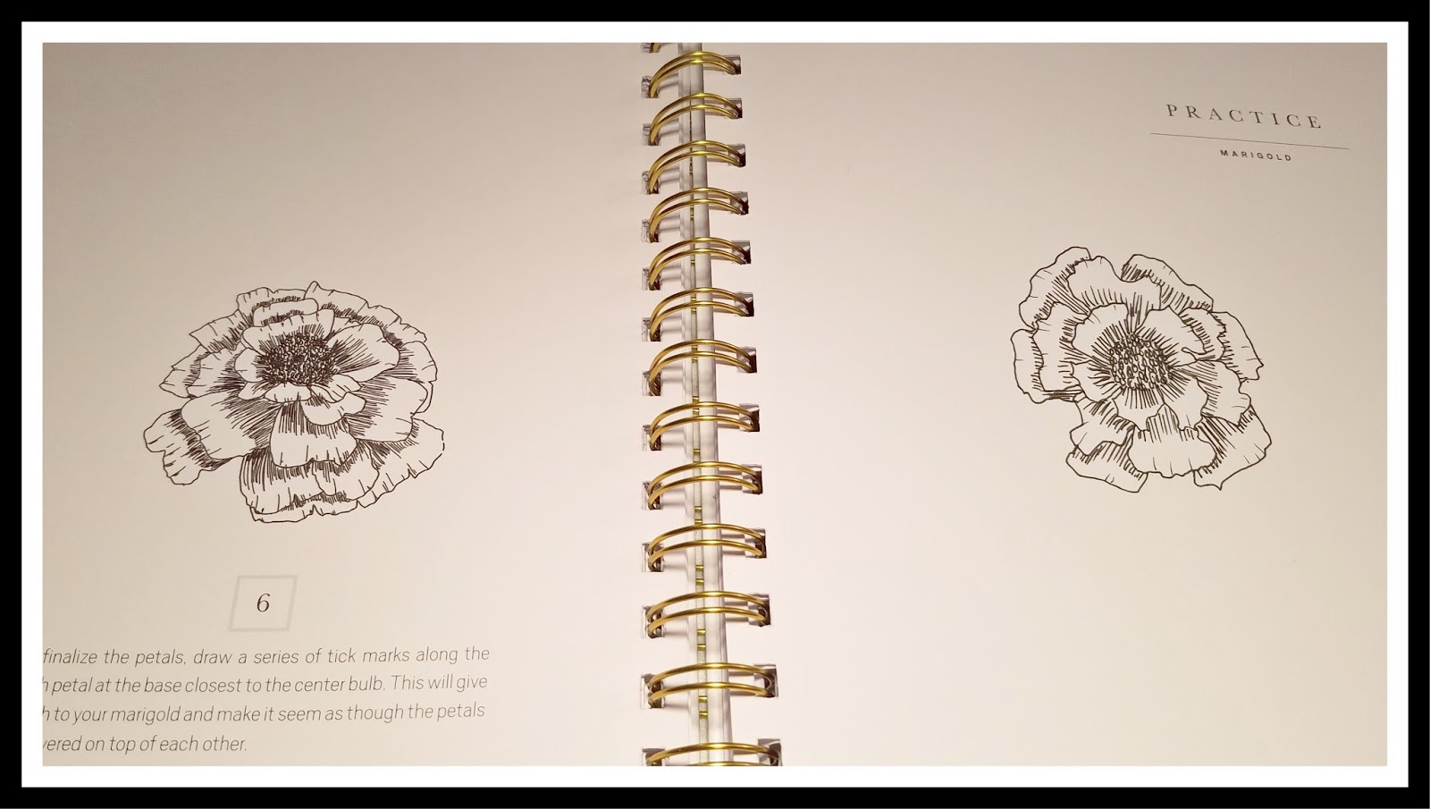 1600x905 Black Bears And Bumble Bees Drawing Modern Florals Book Review