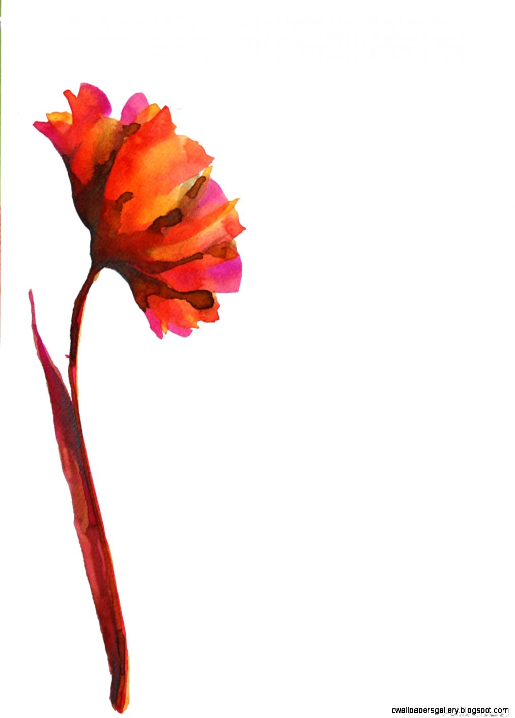 1012x1410 Modern Flower Drawing Wallpapers Gallery