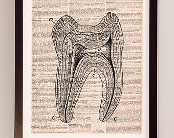 340x270 Human Teeth Print Etsy