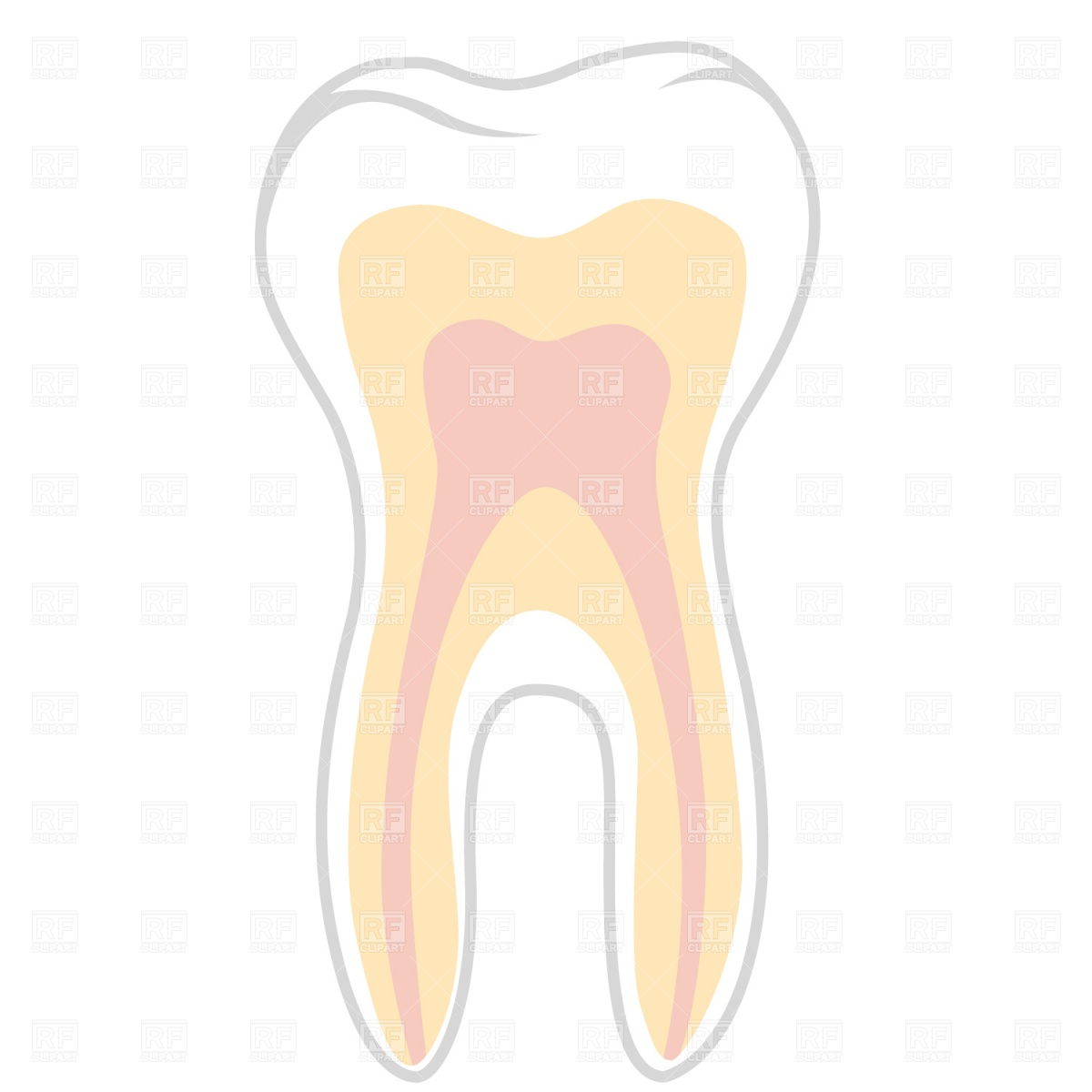1200x1200 Molar Tooth Section Royalty Free Vector Clip Art Image