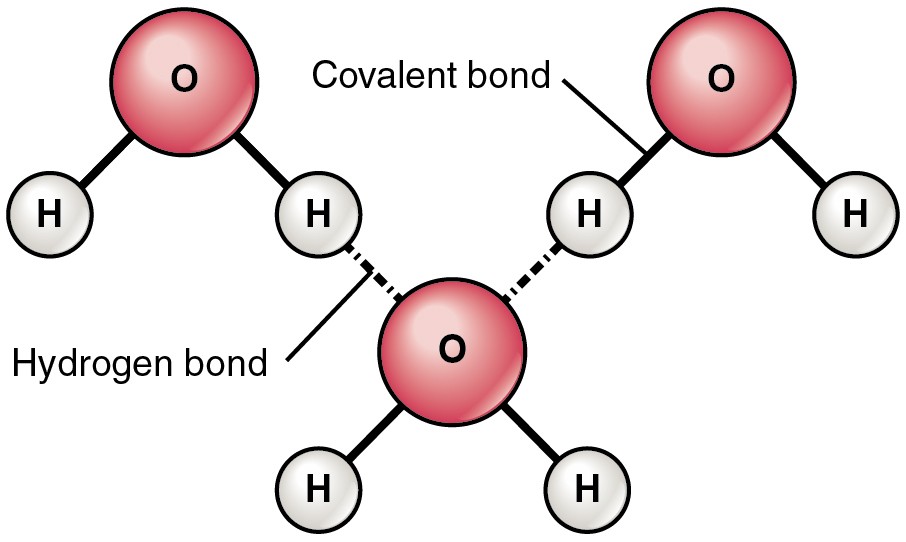 906x542 2.2 Chemical Bonds Anatomy And Physiology