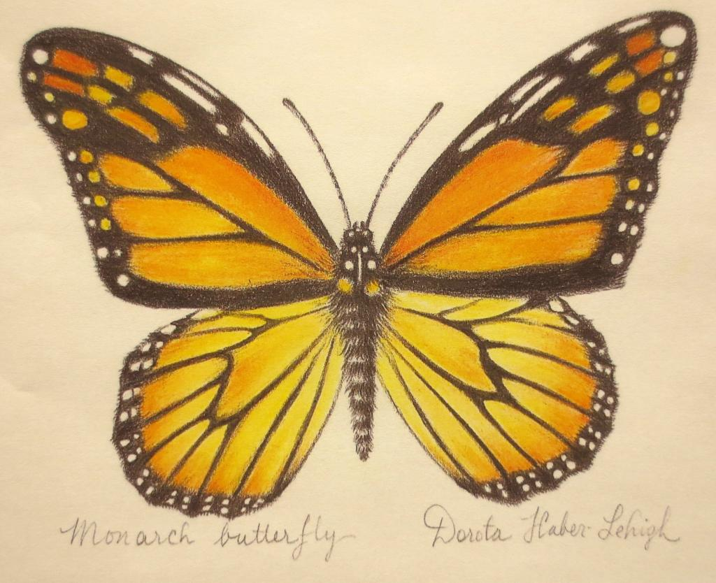 1024x834 Drawing Butterflies Real And Imagined With Dorota Haber Lehigh