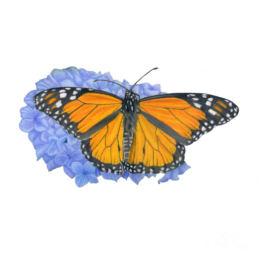 899x900 Monarch Butterfly And Hydrangea Transparent Background Drawing By