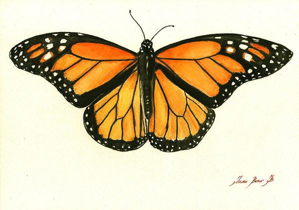 599x420 Monarch Butterfly Art Fine Art America