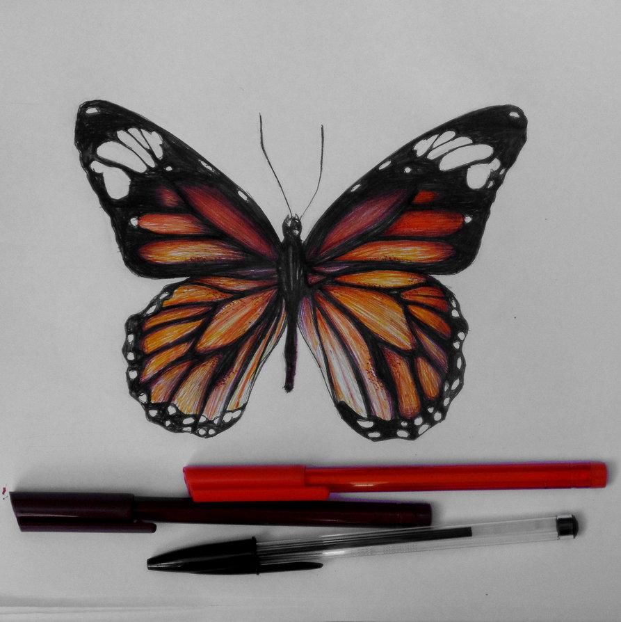 893x894 Monarch Butterfly Ballpoint Pen Drawing By Haloanime97
