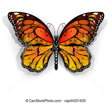 450x415 Orange Butterfly Monarch. Orange, Realistic Monarch Drawings