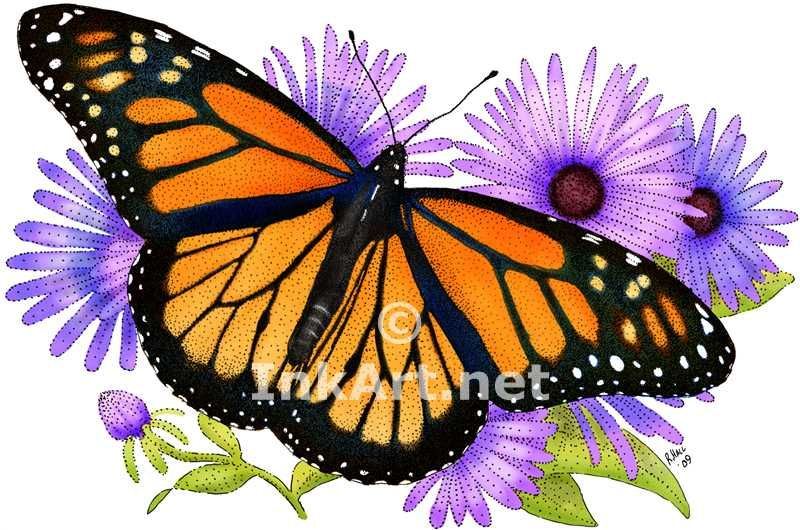 800x530 Monarch Butterfly Images Monarch Butterfly (Danaus Plexippus