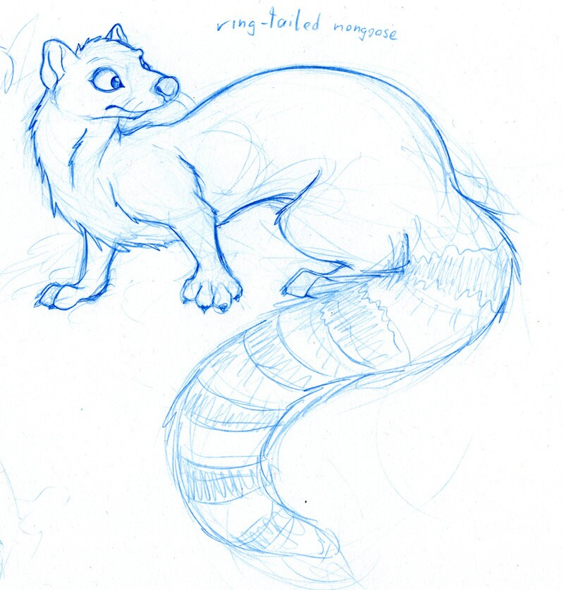 800x837 Base Idea Of Mongoose In A Cartoon Form. Drawing Tuts And Refs