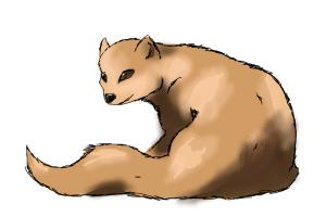 300x200 How To Draw A Mongoose Requested By Redroserescue