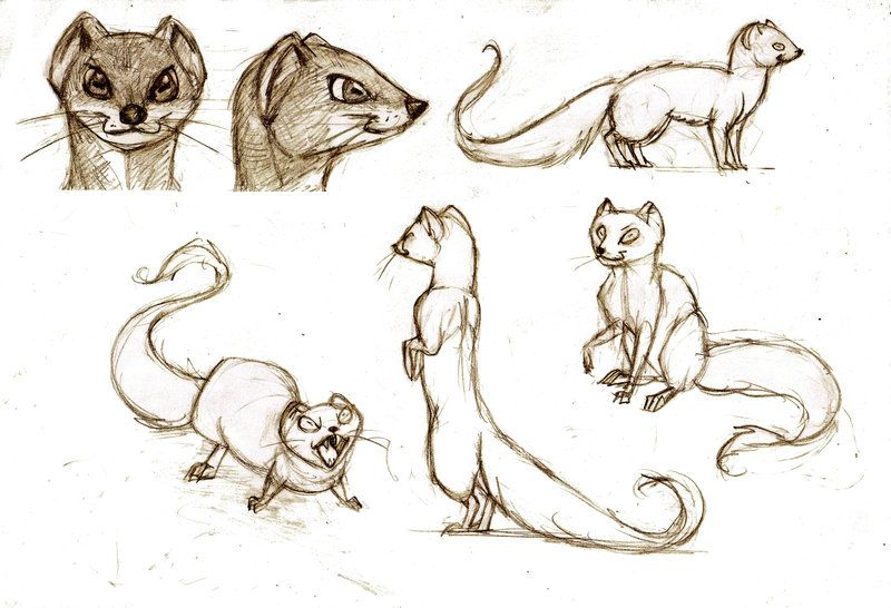 800x546 Yellow Mongoose Doodley Do's By Han Wik On Pen