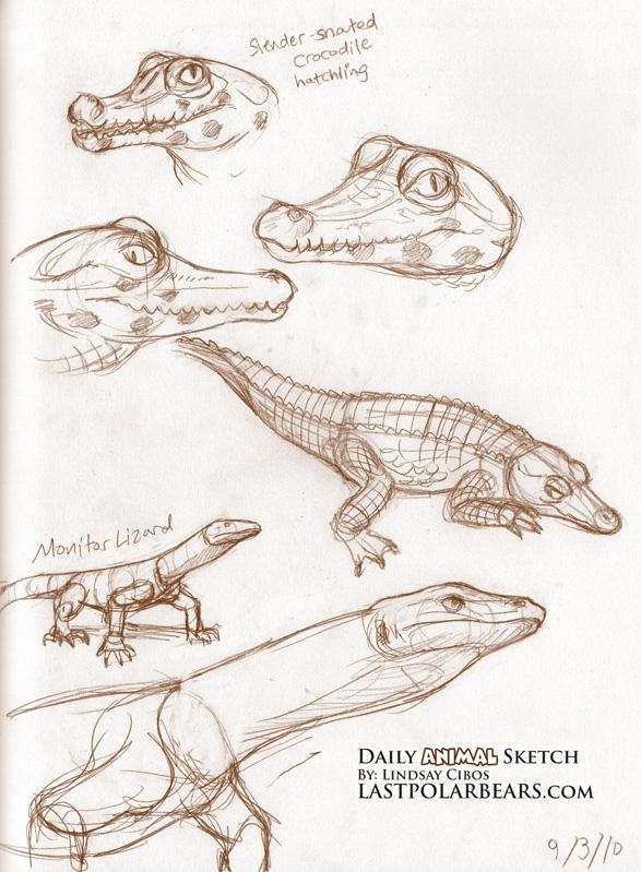587x799 Crocodile And Monitor Lizard Crocodile