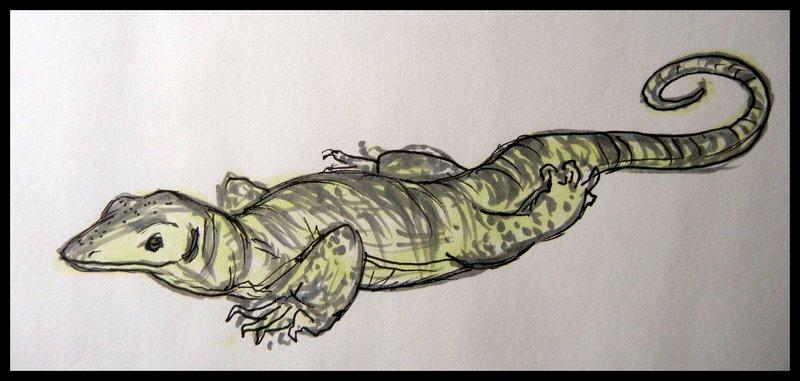 800x381 Gray's Monitor Lizard By Kolidescope