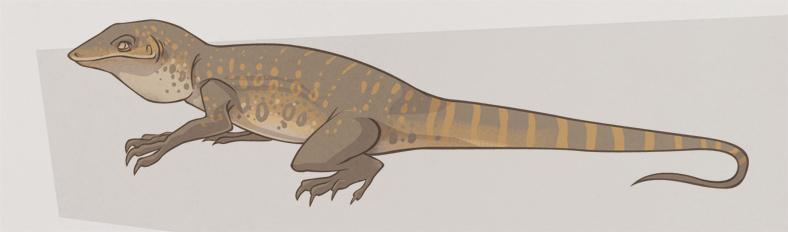 788x232 Monitor Lizard Detail By Beavotron