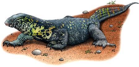 Monitor Lizard Drawing at GetDrawings com | Free for