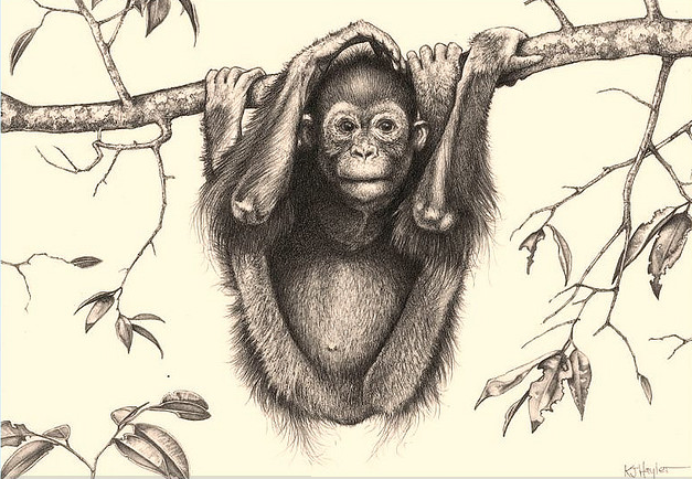 627x434 Black Bear Drawings In Pencil Etailed Pencil Drawing Of A Monkey