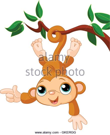 440x540 Monkey Tail Tree Stock Vector Images