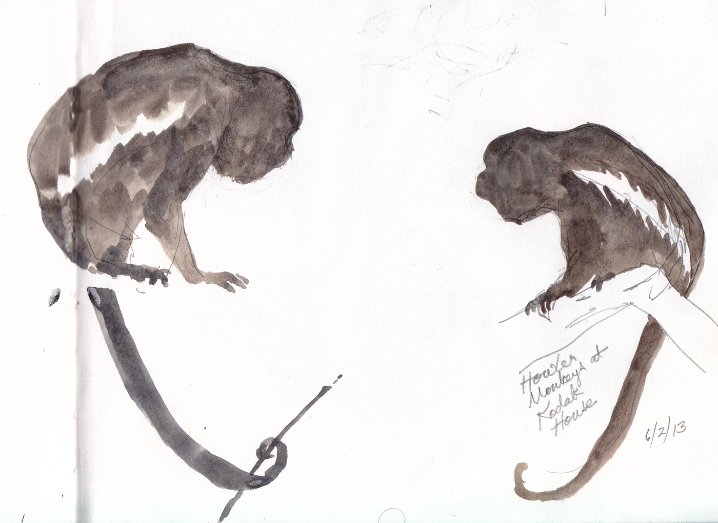 1400x1019 Listen To A Howler Monkey Drawing The Motmot