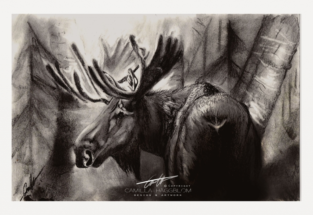 1024x703 Graphite Pencil Drawing Moose Graphite Pencil Drawing Time Lapse