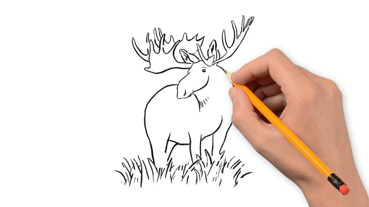 1280x720 Moose Animals Pencil To Draw Step By Step