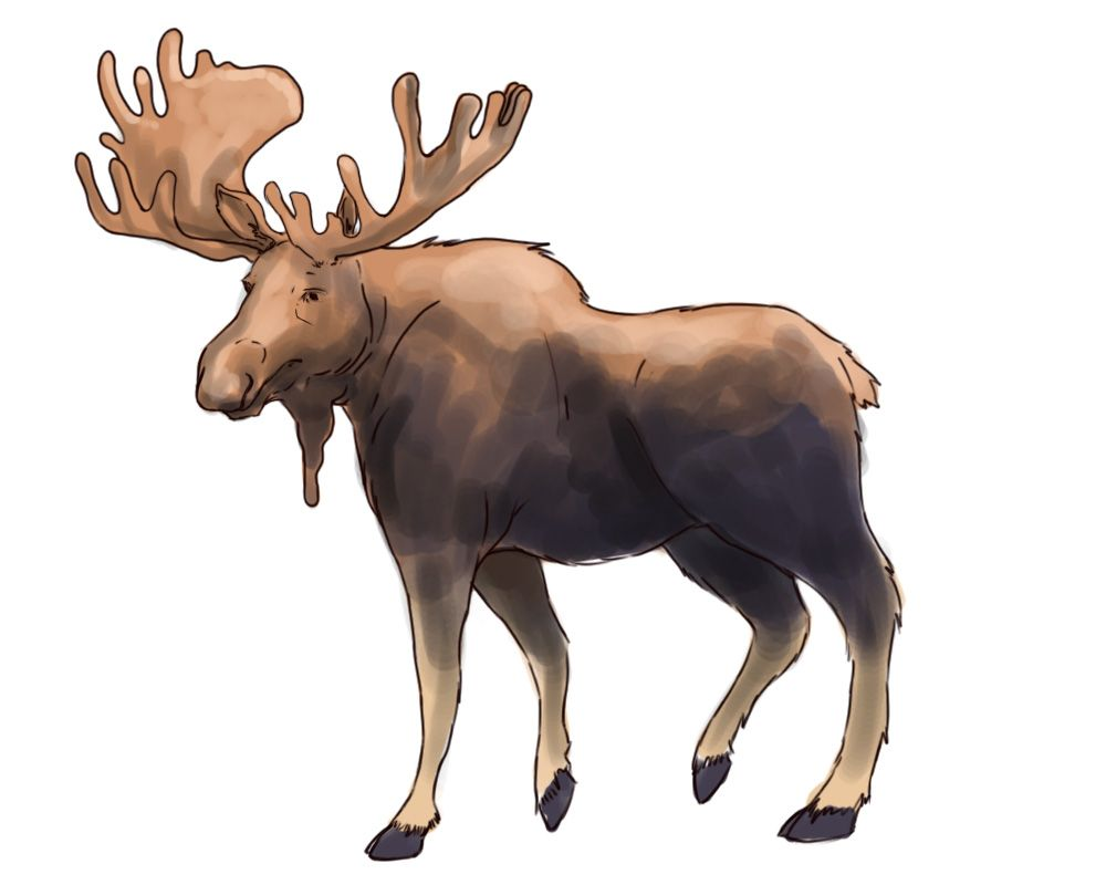 Moose drawing for kids at getdrawings free for personal use 1000x800 how to draw a moose getting kids through school pinterest thecheapjerseys Image collections
