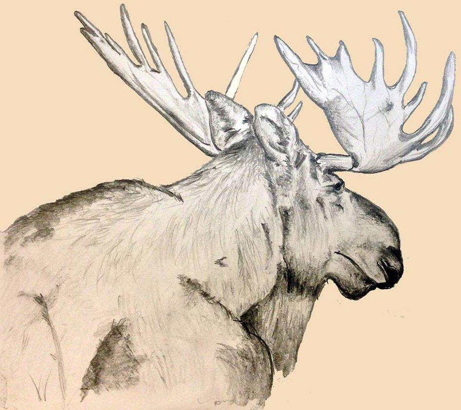 947x843 Alaska Moose