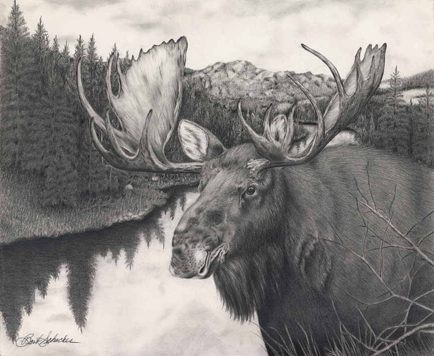864x709 Alaskan Bull Moose Pencil Drawing Print