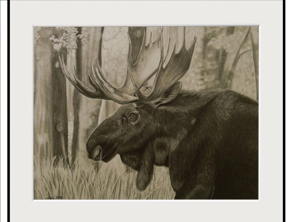 1024x769 Bull Moose Pencil Drawing By Dustindattilioart