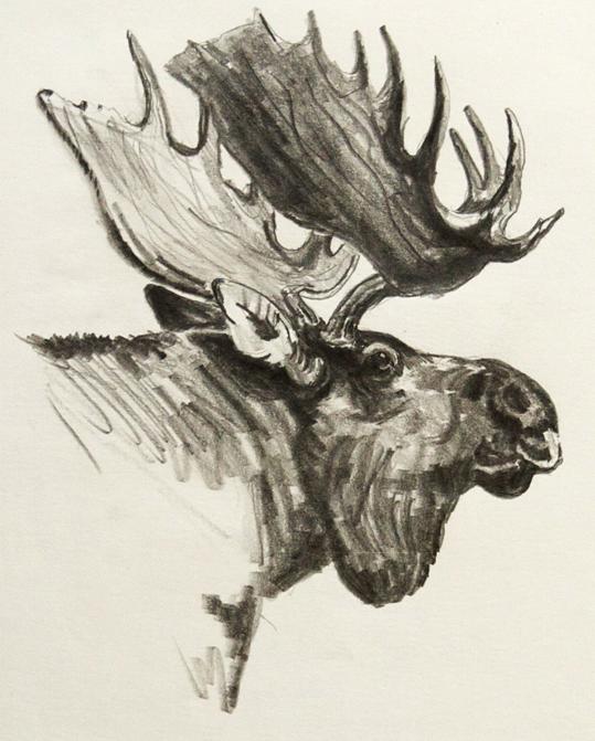 539x671 Carl Steelfox, Pencil Drawing Gallery