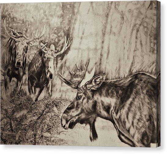 546x502 Cow Pencil Drawing Canvas Prints