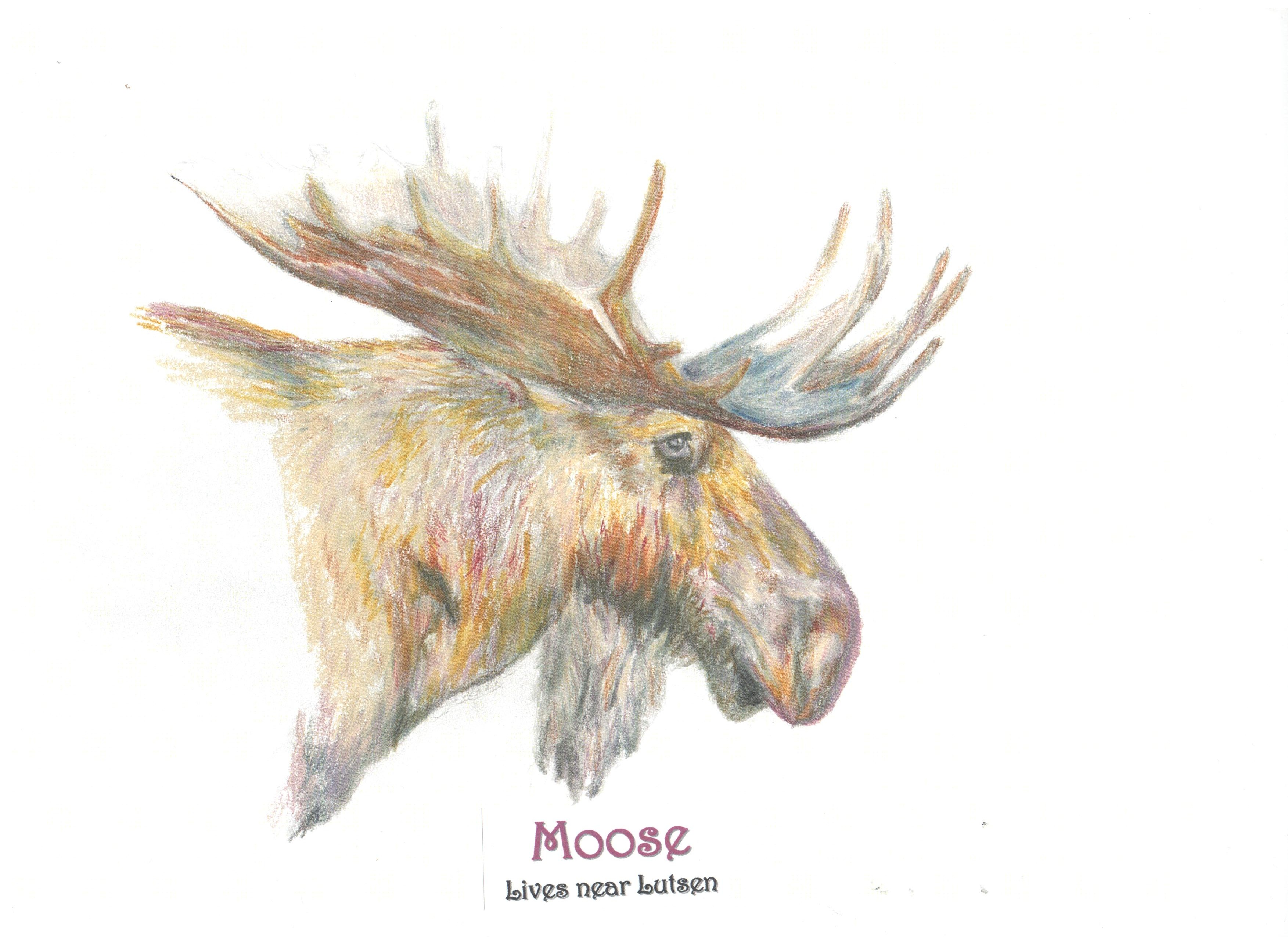 3506x2550 Moose Pencil, Watercolor Pencil Sketches By Jane Selstad