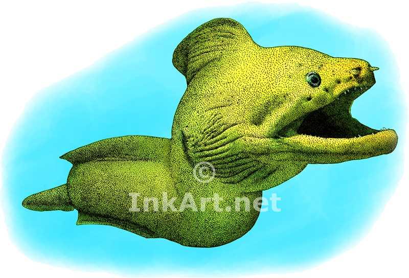 800x544 Giant Moray Eel Stock Art Illustration