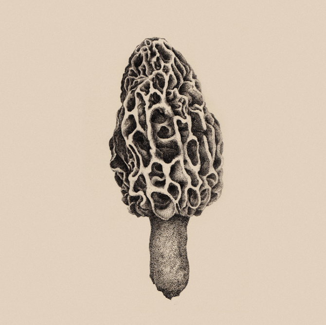 670x669 And The Morel Is