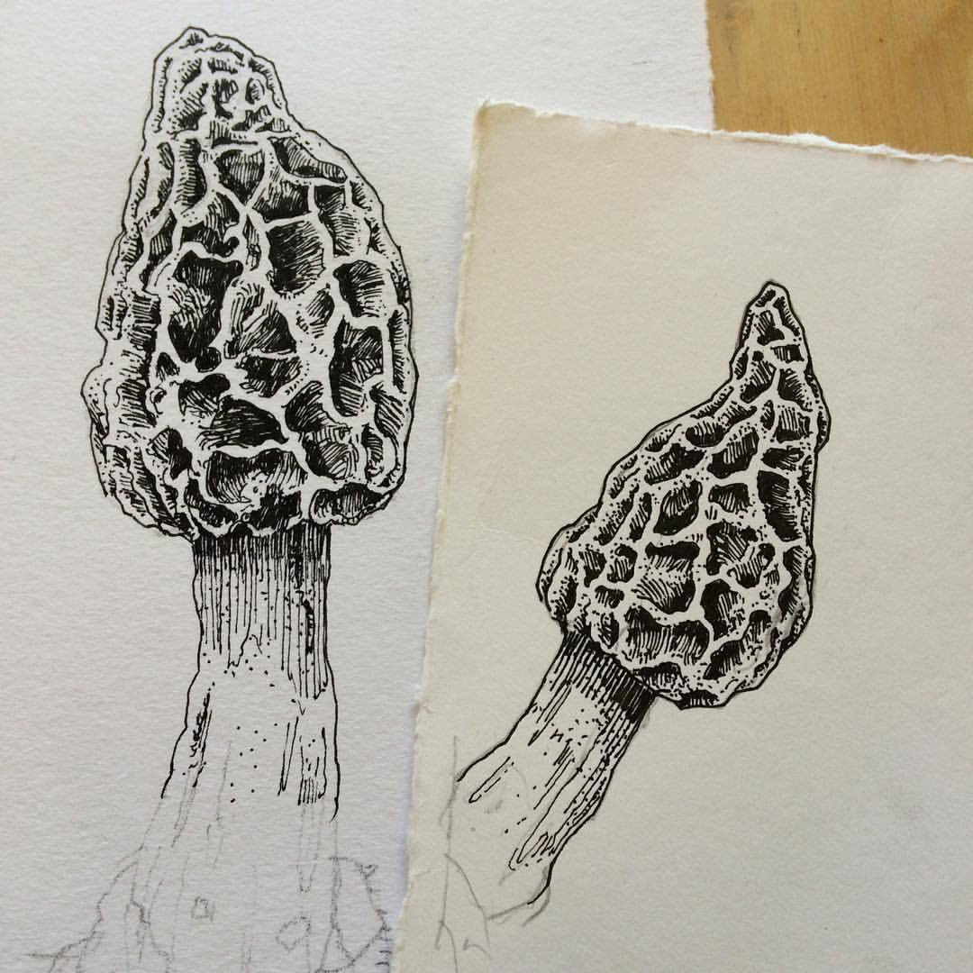 1080x1080 Crvdpls More Morels!!! Going To Digitally Splice These