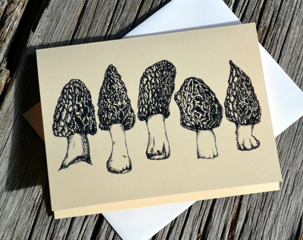 1024x813 Morel Mushroom Drawing Card Popup