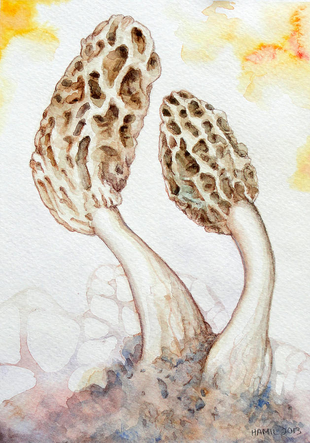 629x900 Yellow Morel Mushrooms Painting By Alison Hamil