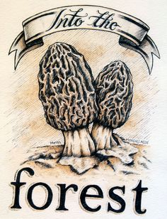 236x308 Morel Drawing Morel Mushrooms Drawing Morel Mushroom By Omyle