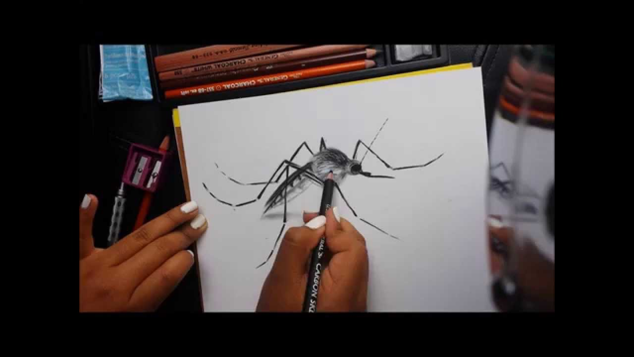 1280x720 How To Draw A Mosquito