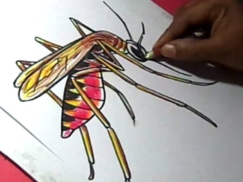 480x360 How To Draw Malaria Mosquito Drawing For Kids Step By Step