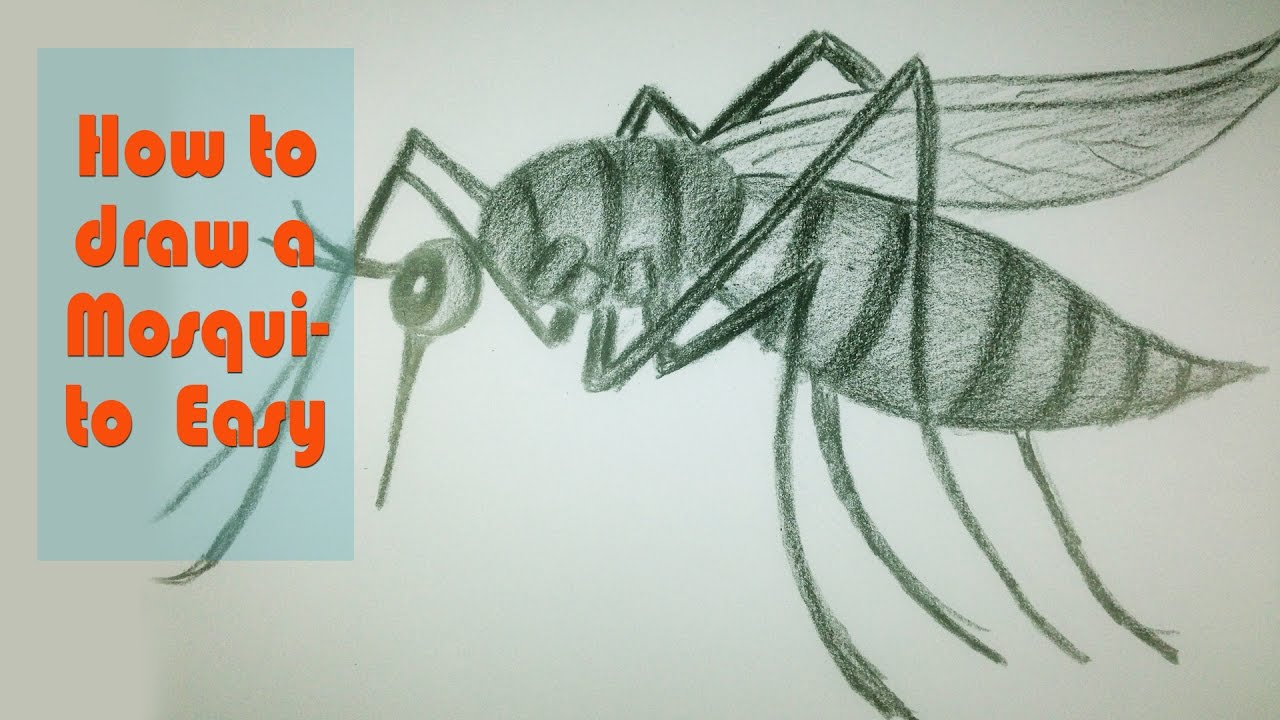 1280x720 How To Draw A Mosquito Easy