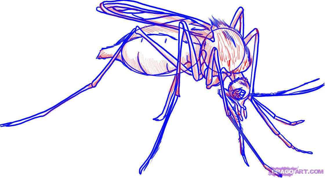 1121x615 How To Draw A Mosquito Insect Step 7 Technique