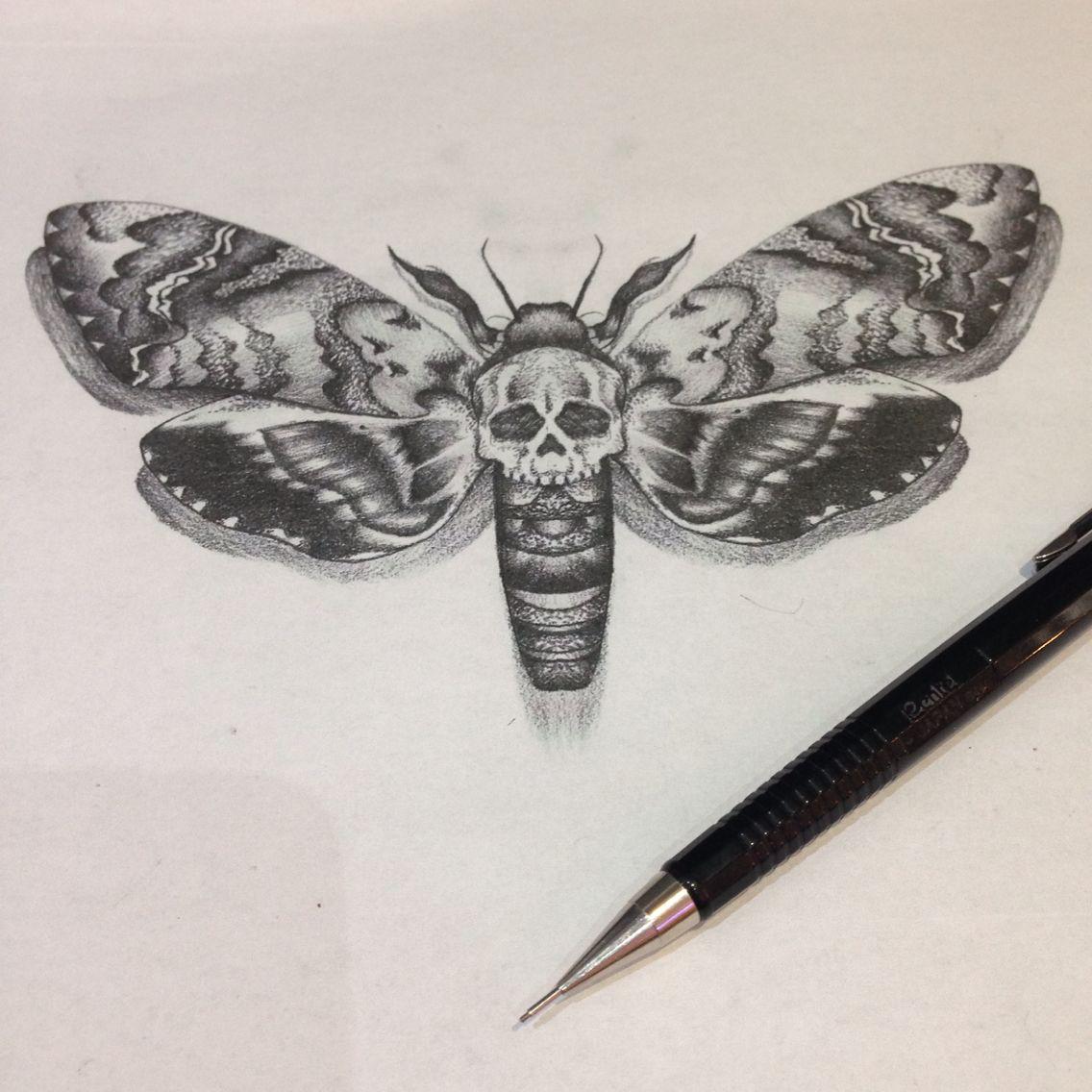 1136x1136 Hawk Moth Drawing Artsy Moth Drawing And Drawings