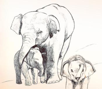 350x307 Mother Elephant Sunnyside Studios