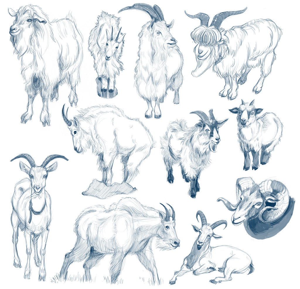 Mountain Goat Drawing at GetDrawings.com | Free for personal use ...