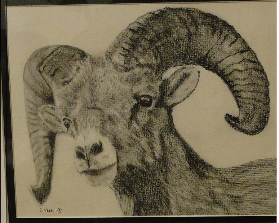 900x720 Mountain Goat Drawing By Shaunna Newell