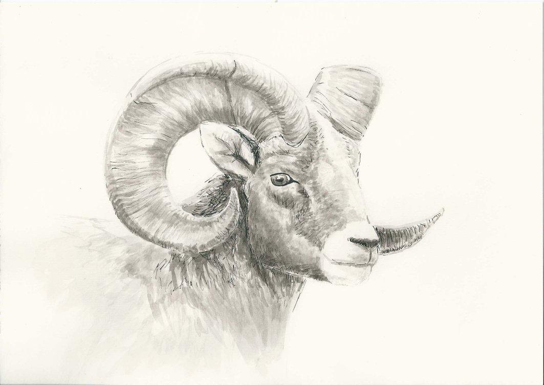 1063x752 Mountain Goat By Emily Ek