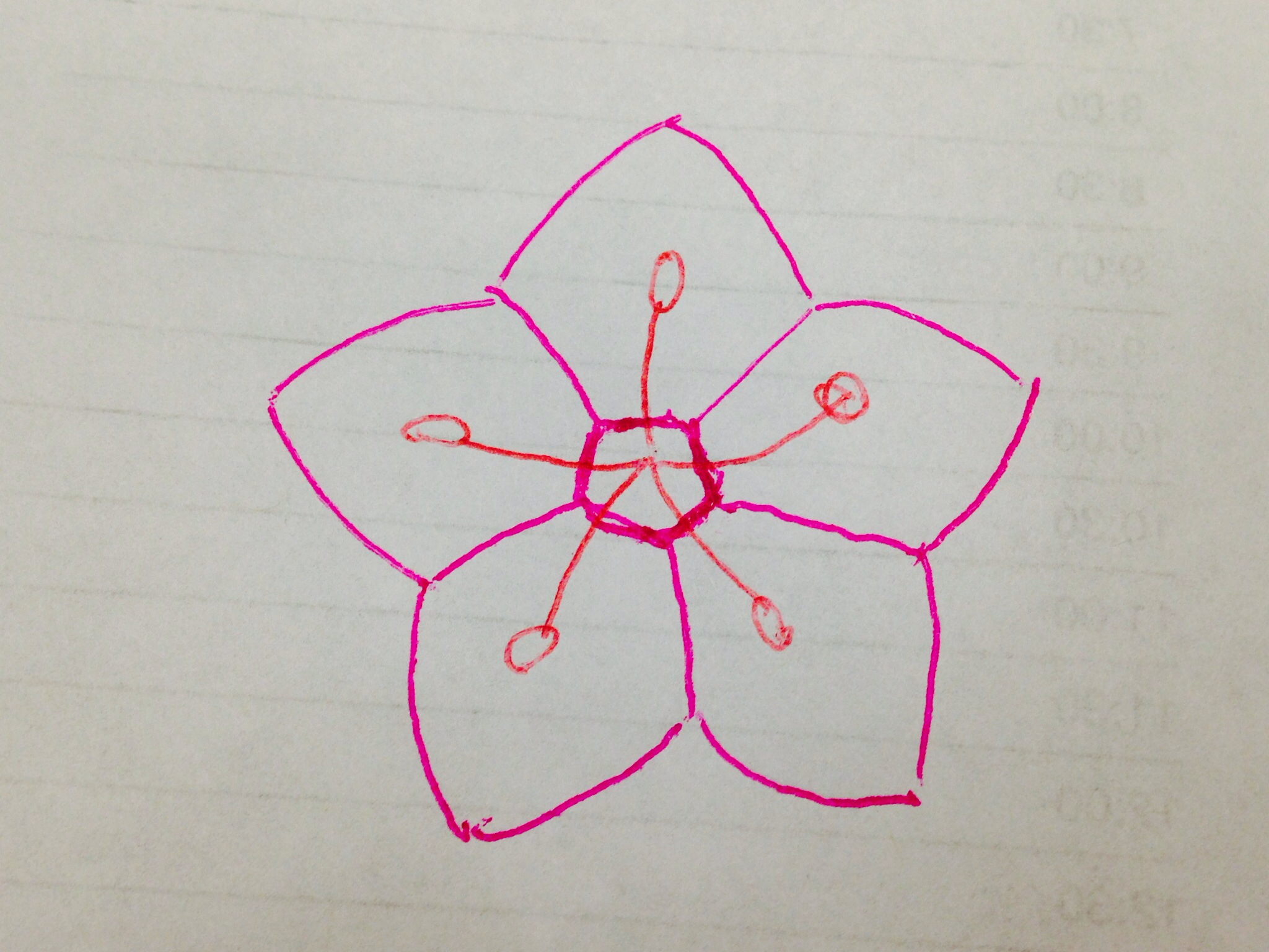 2048x1536 A Rough Drawing For My Personal Token. Mountain Laurel