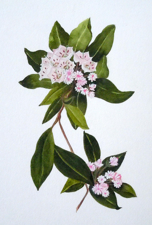 610x900 Mountain Laurel Painting By Jean Blackmer