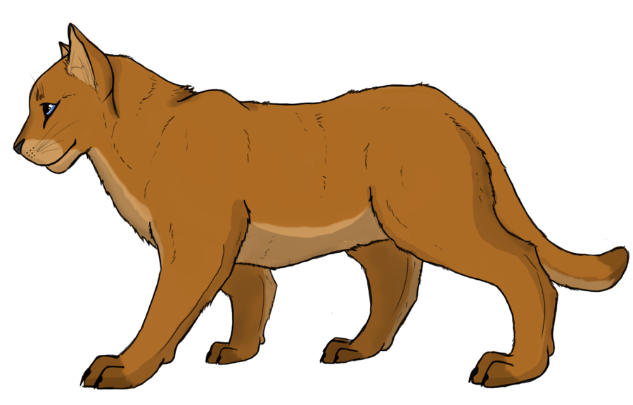mountain lion drawing at getdrawings com free for personal use rh getdrawings com